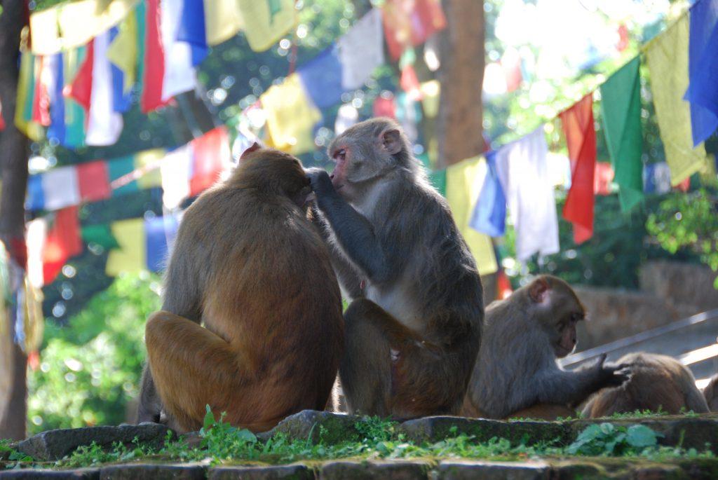 Kathmandu valley sightseeing tour (16)