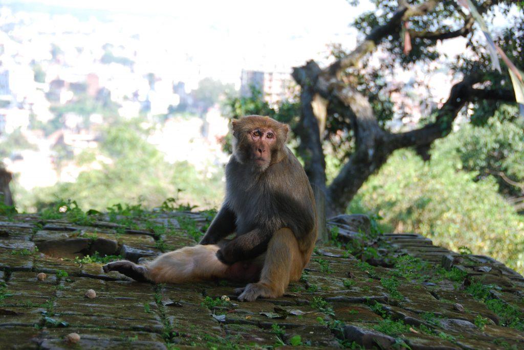 Kathmandu valley sightseeing tour (17)