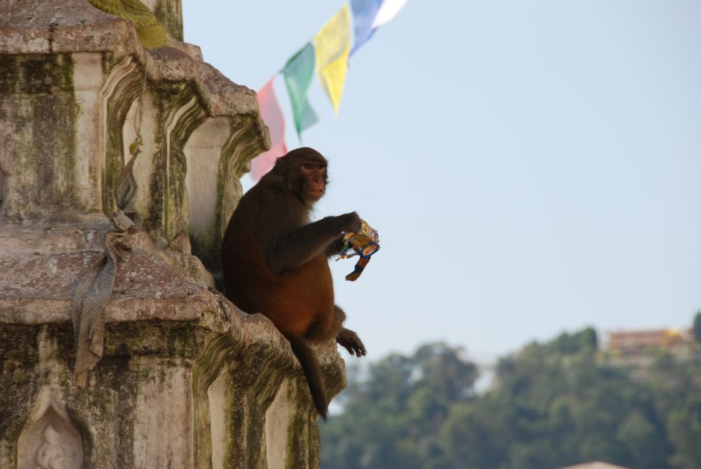 Kathmandu valley sightseeing tour (9)