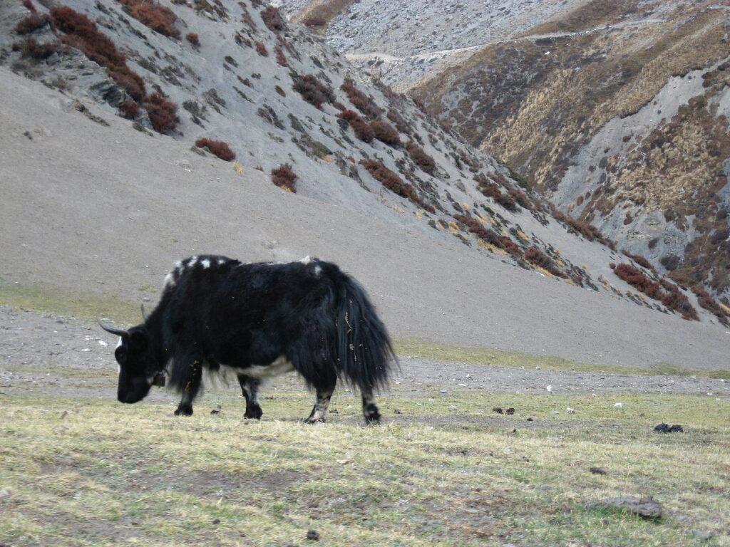 Mera peak (11)