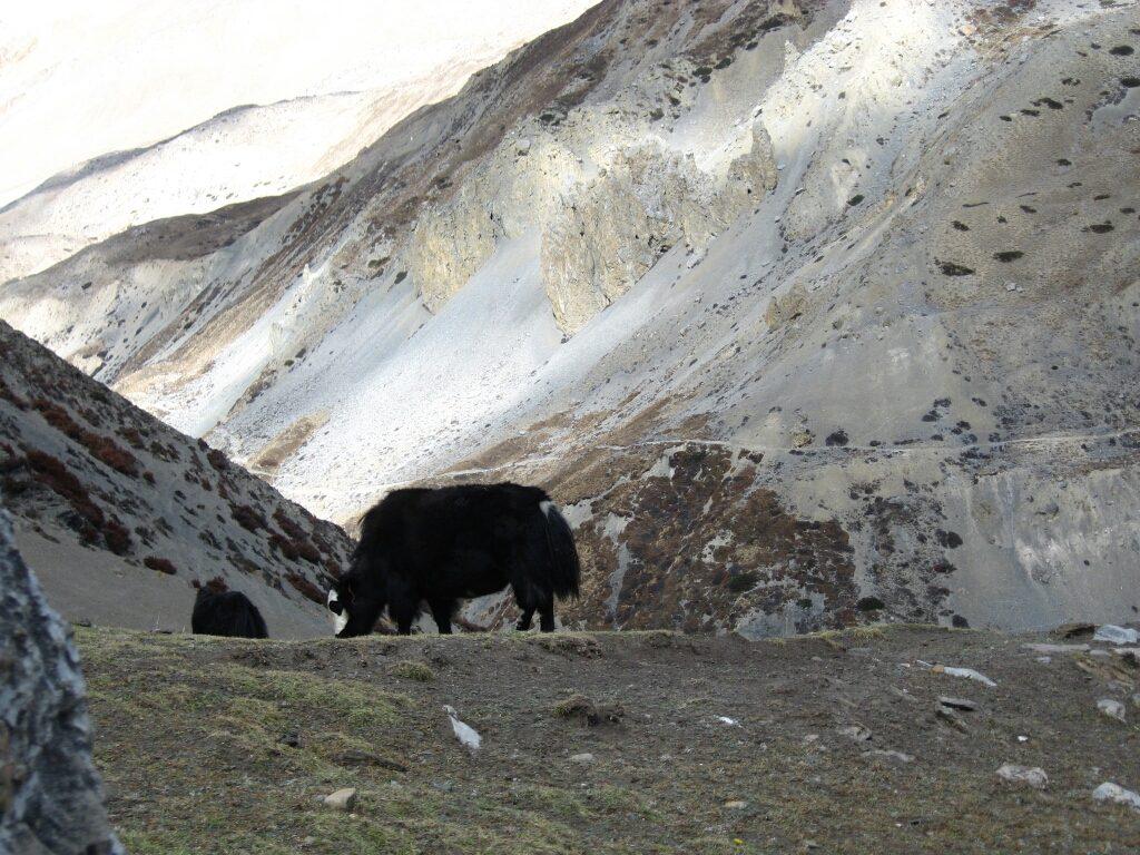 Mera peak (13)