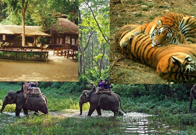 Chitwan tour 1