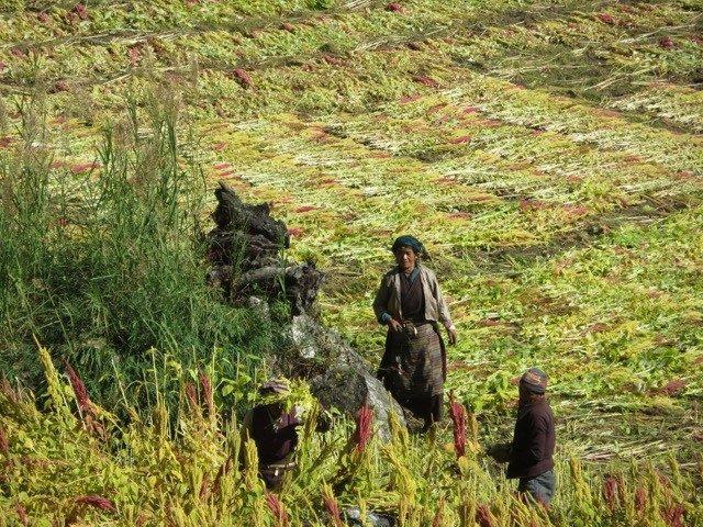 Tsum valley trekking 8