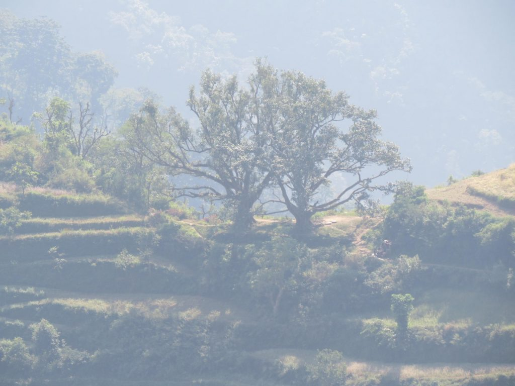 Upper Dhangadi Trek - FIRST ENVIRONMENTAL TREKKING Pvt  Ltd