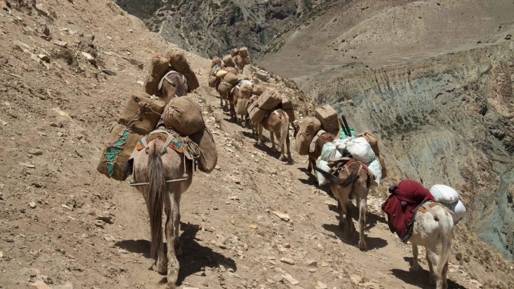 Upper dolpa trek 40