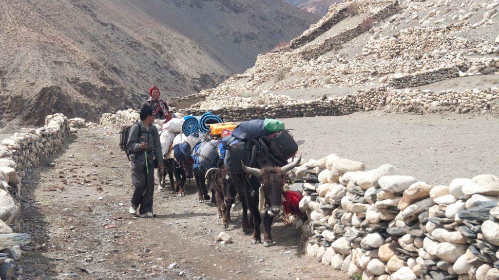 Upper dolpa trek 42