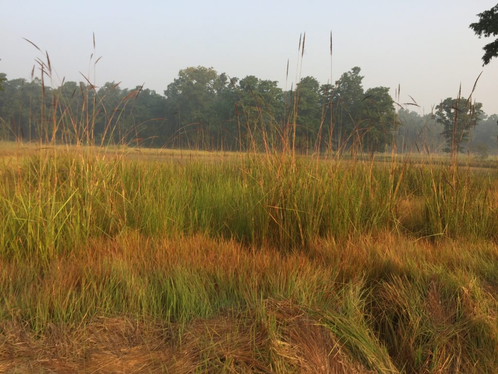 Bardia national park tour (12)