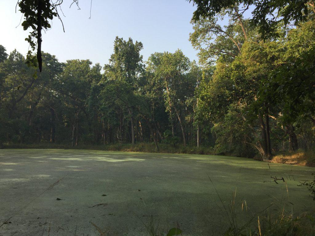 Bardia national park tour (15)