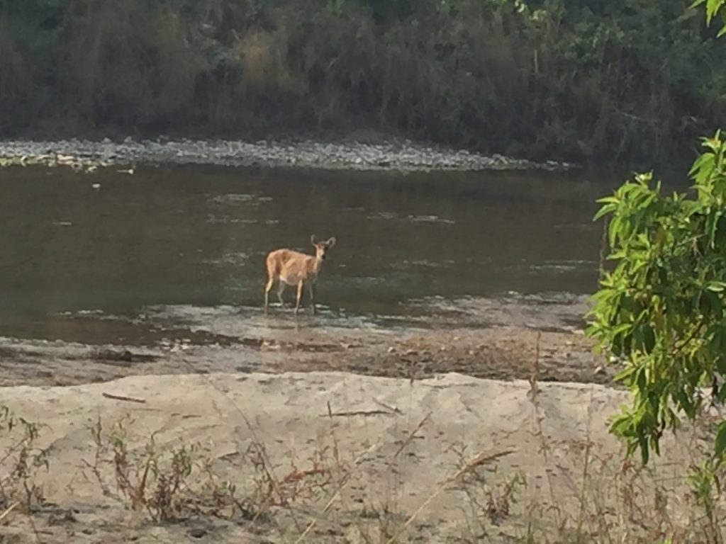 Bardia national park tour (19)