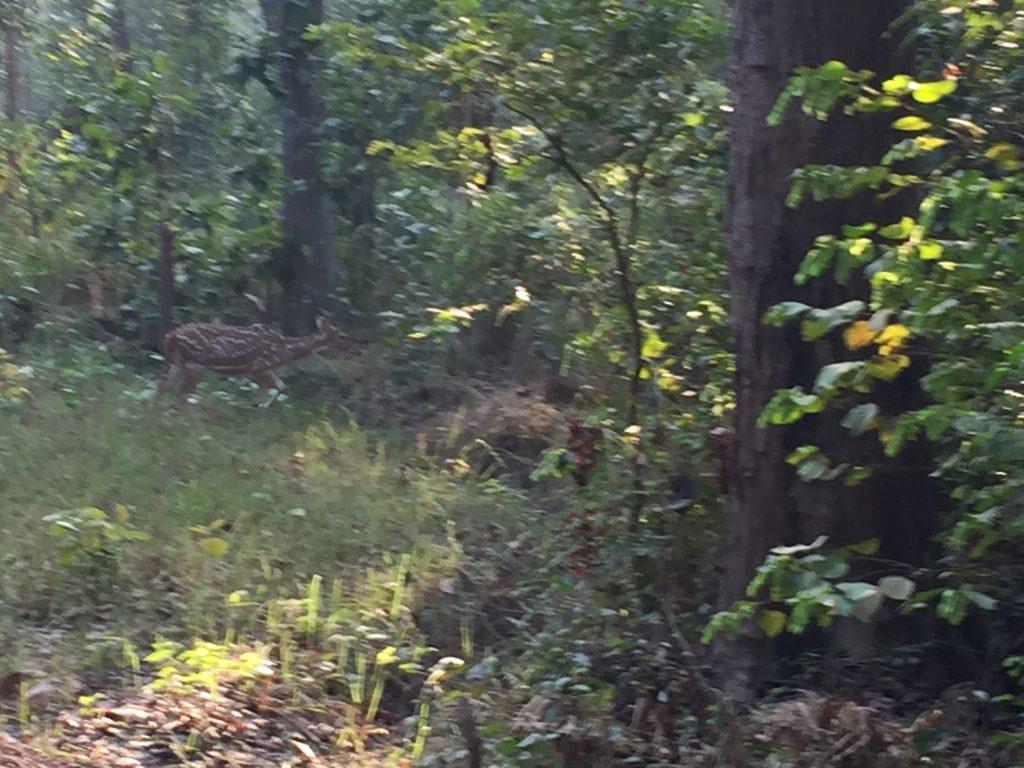 Bardia national park tour (28)