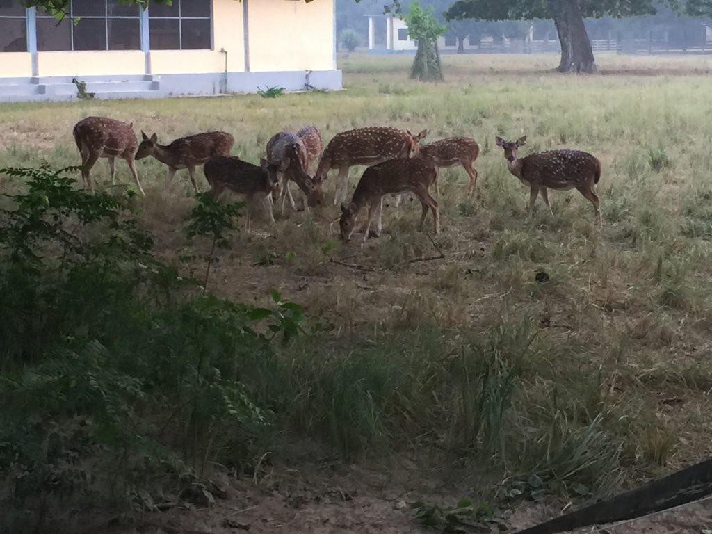Bardia national park tour (31)