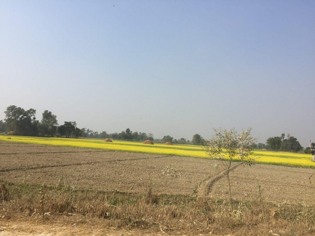 Bardia national park tour (37)