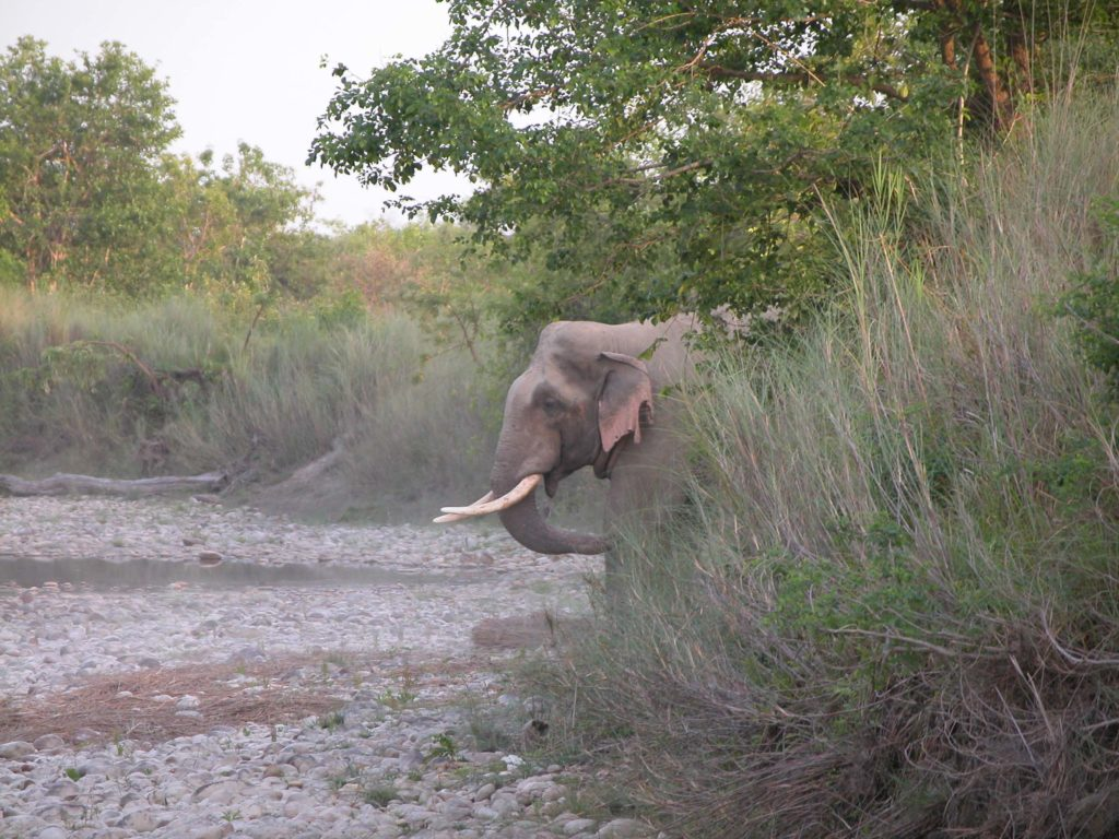 Bardiya national park (10)
