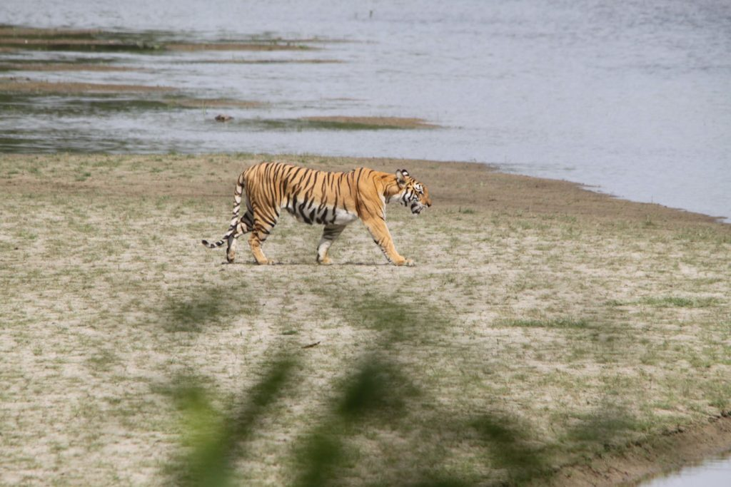 Bardiya national park (100)