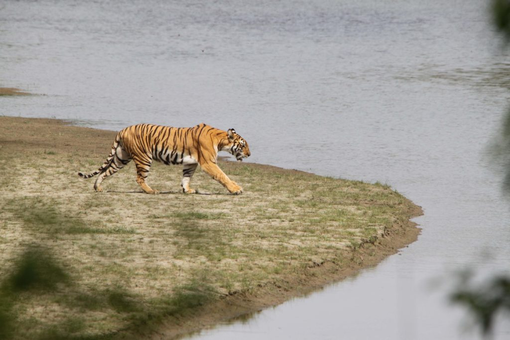 Bardiya national park (101)