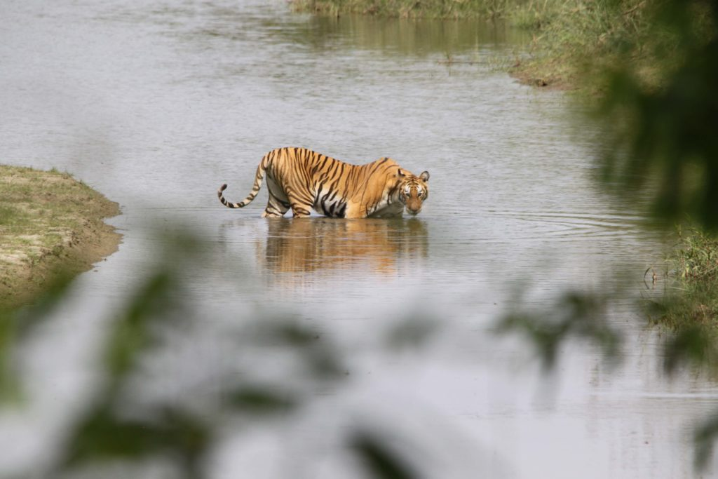 Bardiya national park (102)