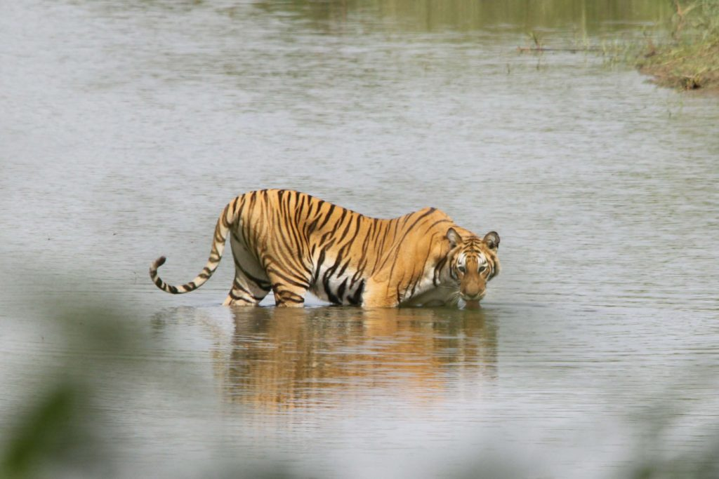 Bardiya national park (103)