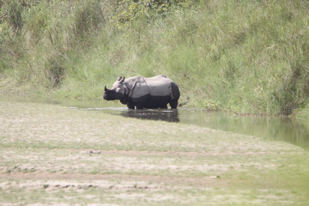 Bardiya national park (104)