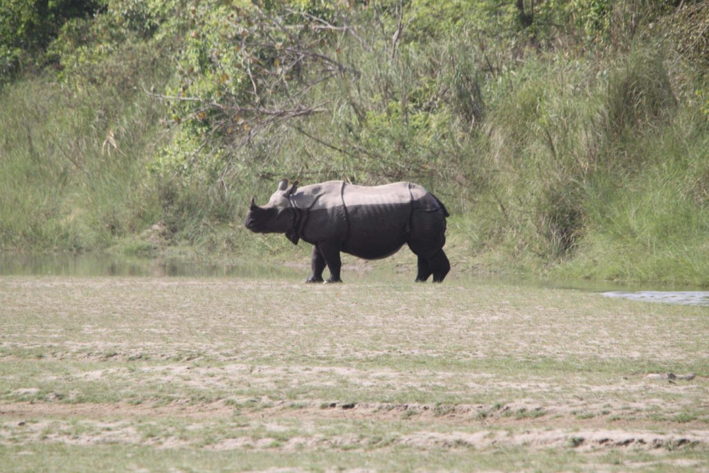 Bardiya national park (105)
