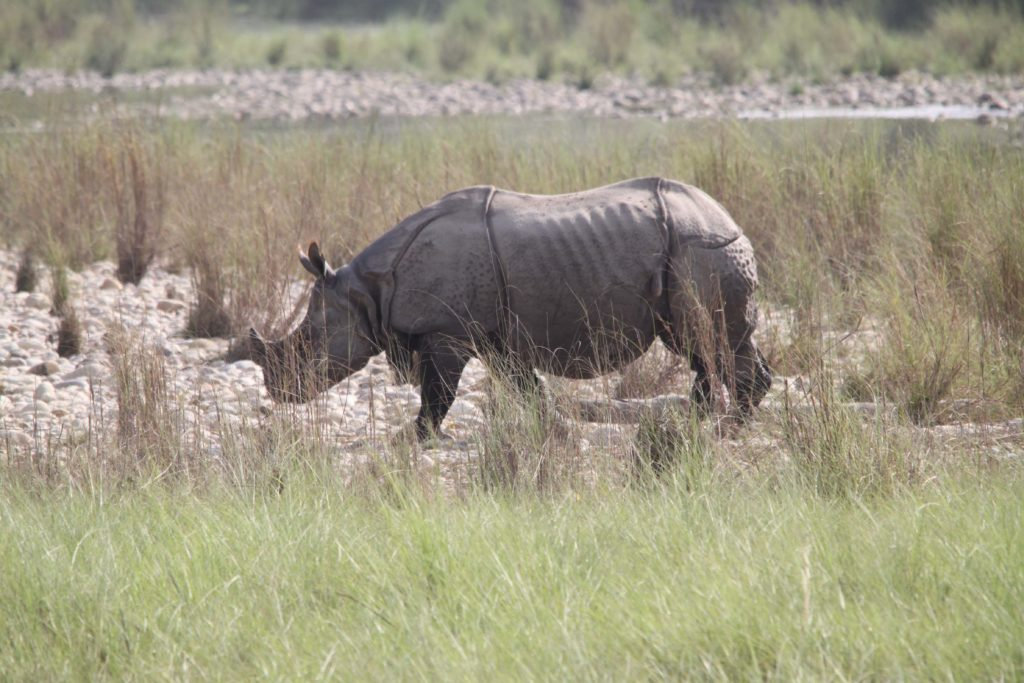 Bardiya national park (106)