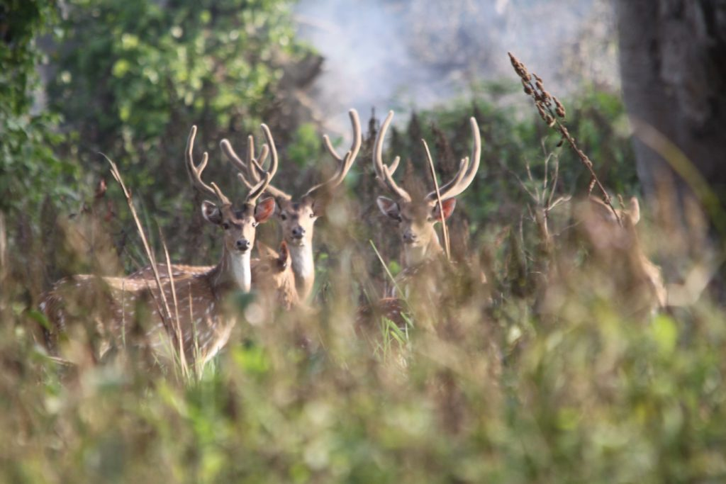 Bardiya national park (107)