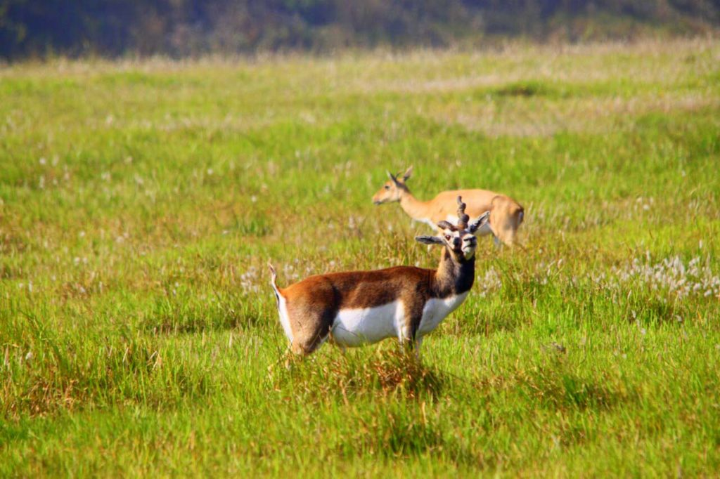 Bardiya national park (108)