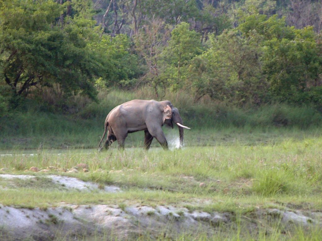 Bardiya national park (11)