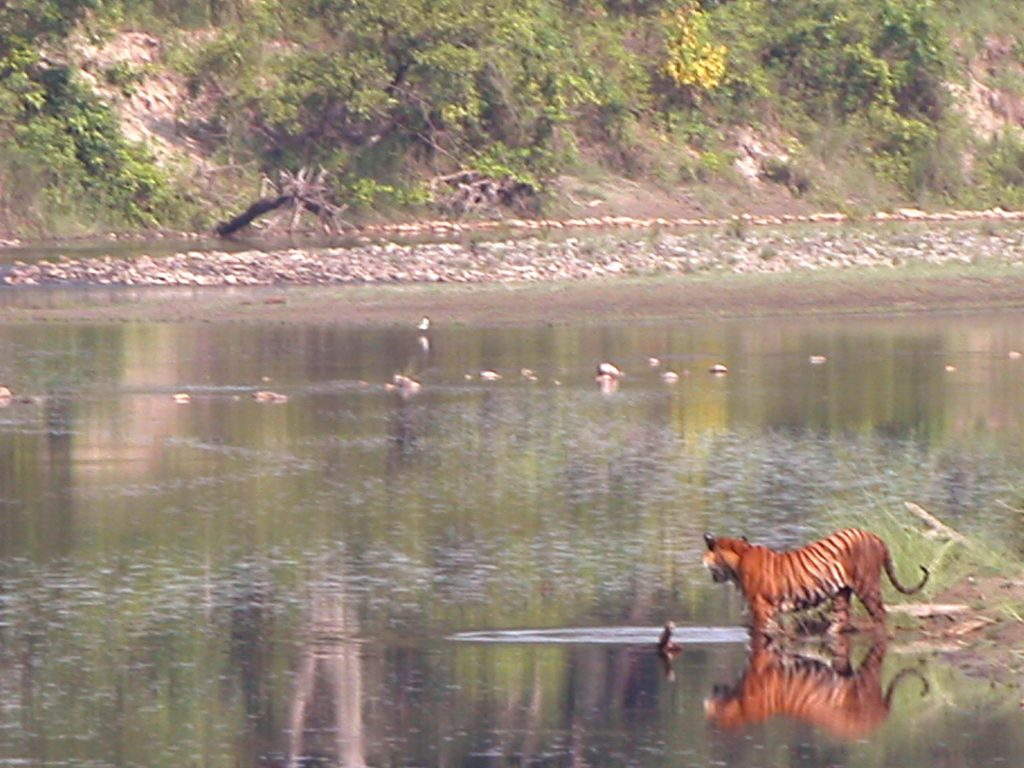 Bardiya national park (13)