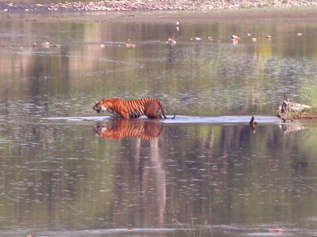 Bardiya national park (14)