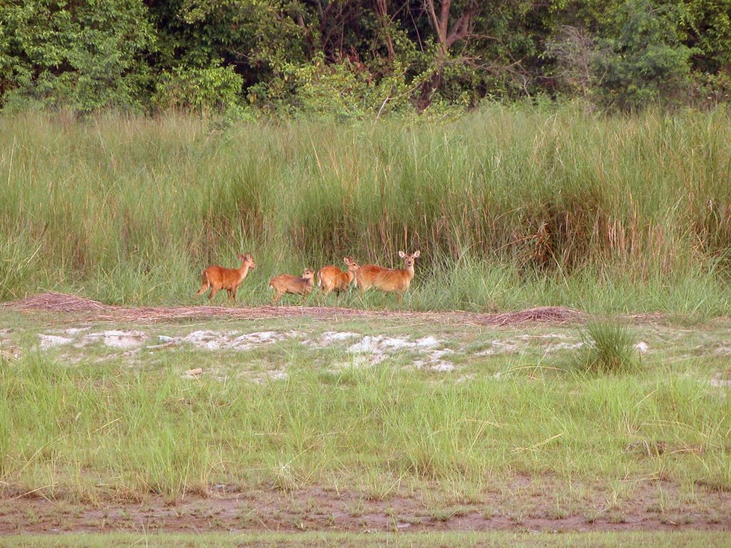 Bardiya national park (18)