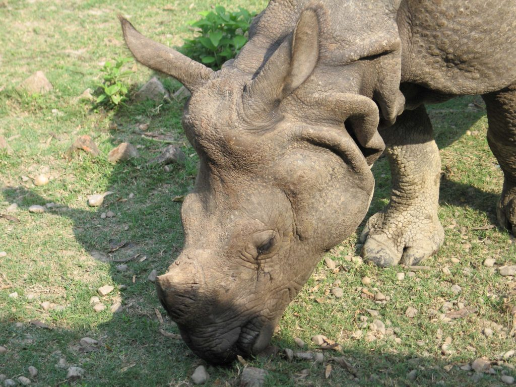Bardiya national park (2)