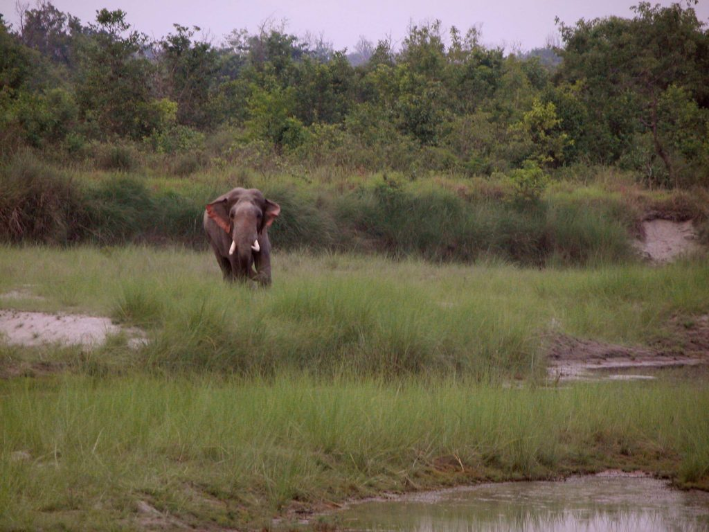Bardiya national park (20)