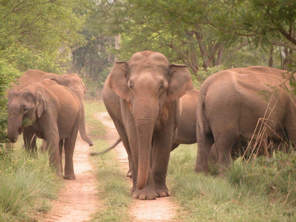 Bardiya national park (21)