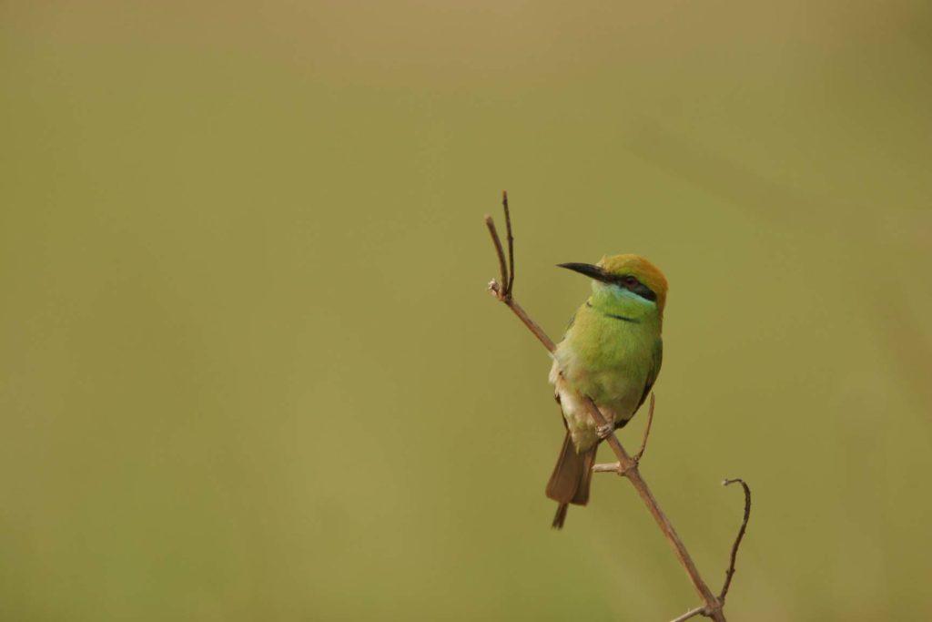 Bardiya national park (23)