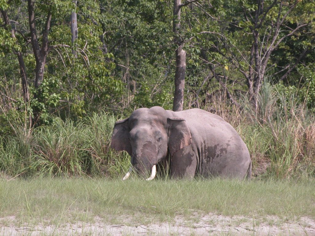 Bardiya national park (24)