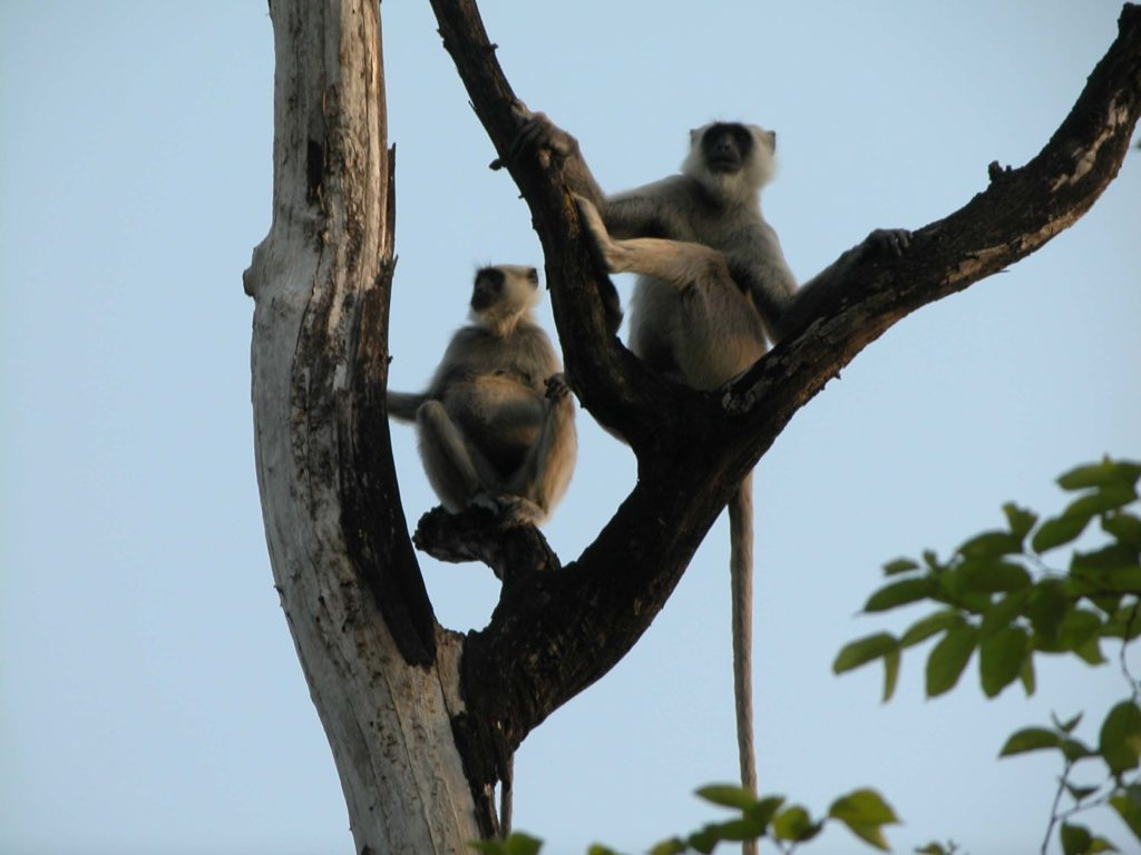 Bardiya national park (26)