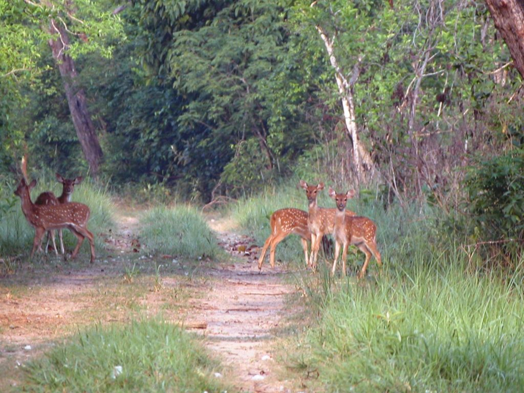Bardiya national park (27)