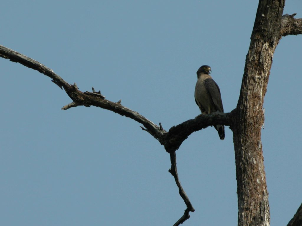 Bardiya national park (3)