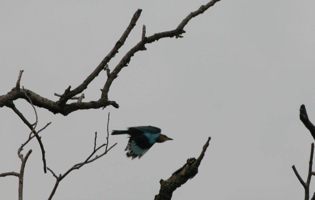 Bardiya national park (32)