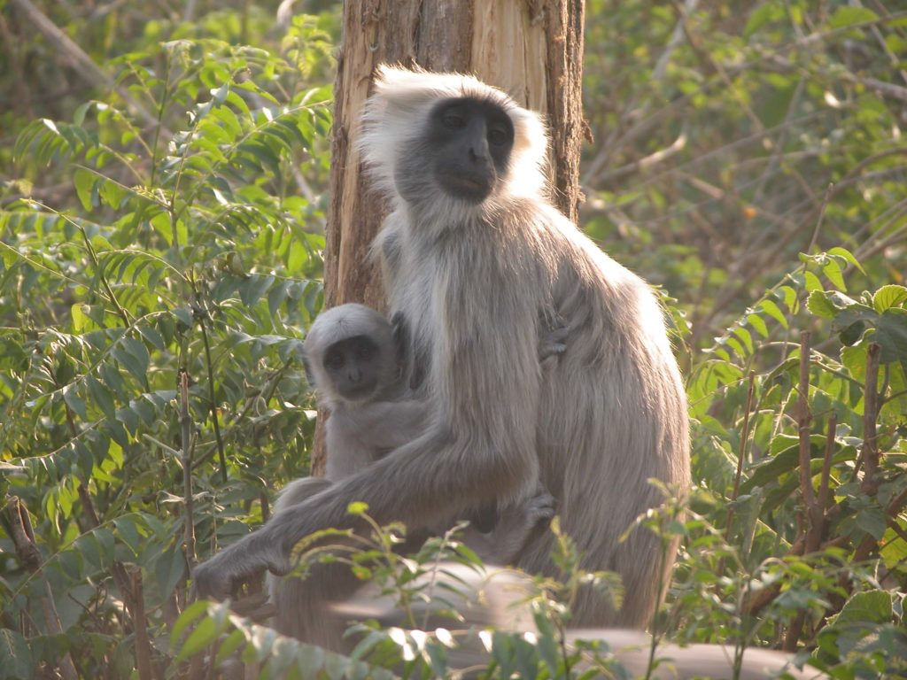 Bardiya national park (35)