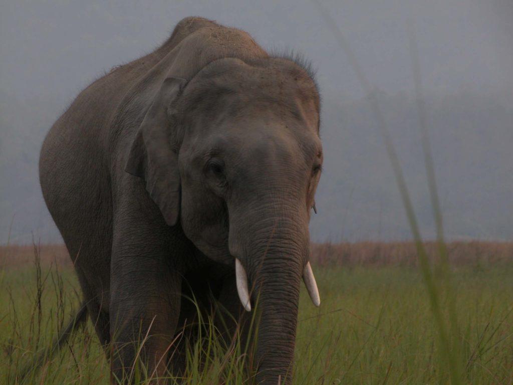 Bardiya national park (37)
