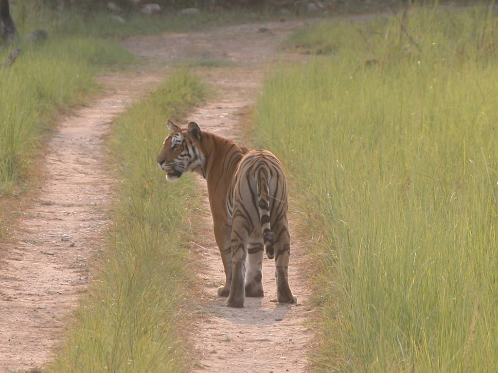 Bardiya national park (38)