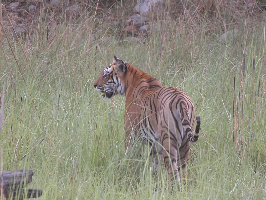 Bardiya national park (39)