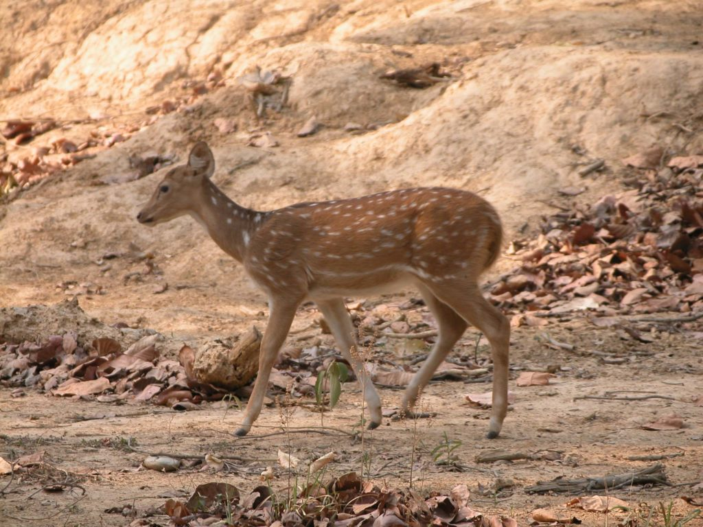 Bardiya national park (40)