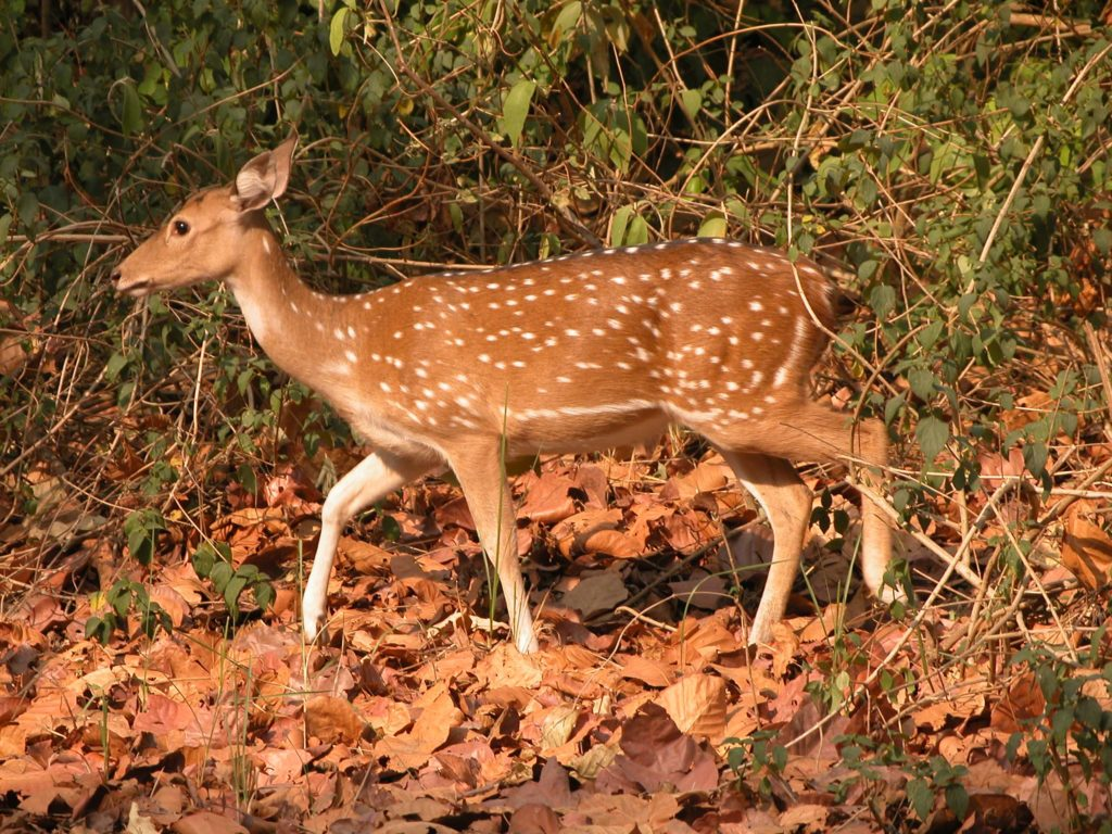 Bardiya national park (41)
