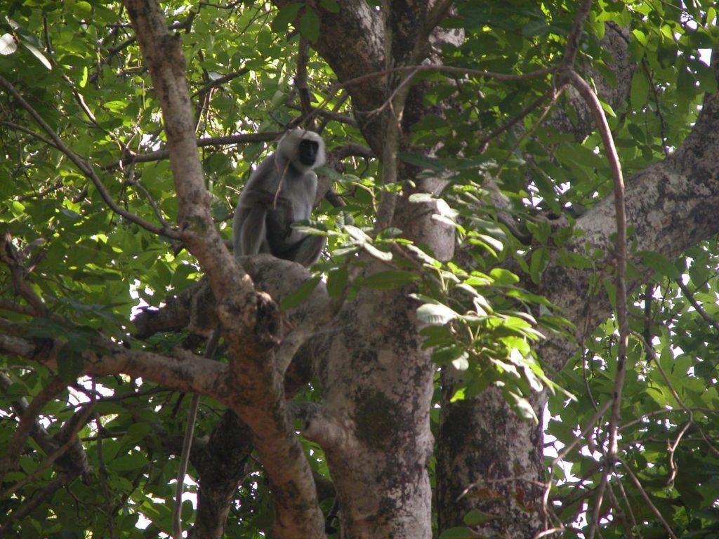 Bardiya national park (43)
