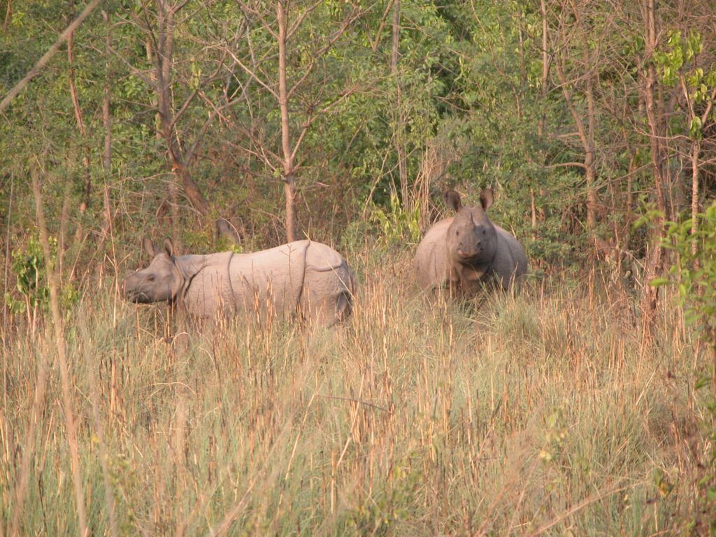 Bardiya national park (44)