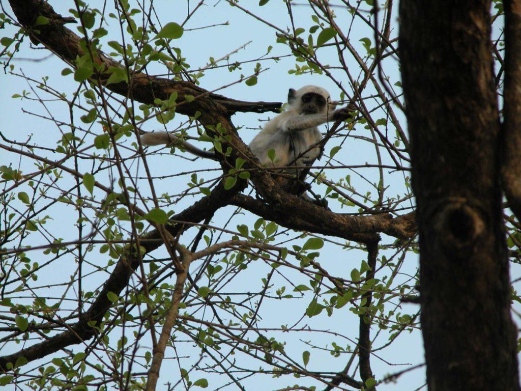 Bardiya national park (45)
