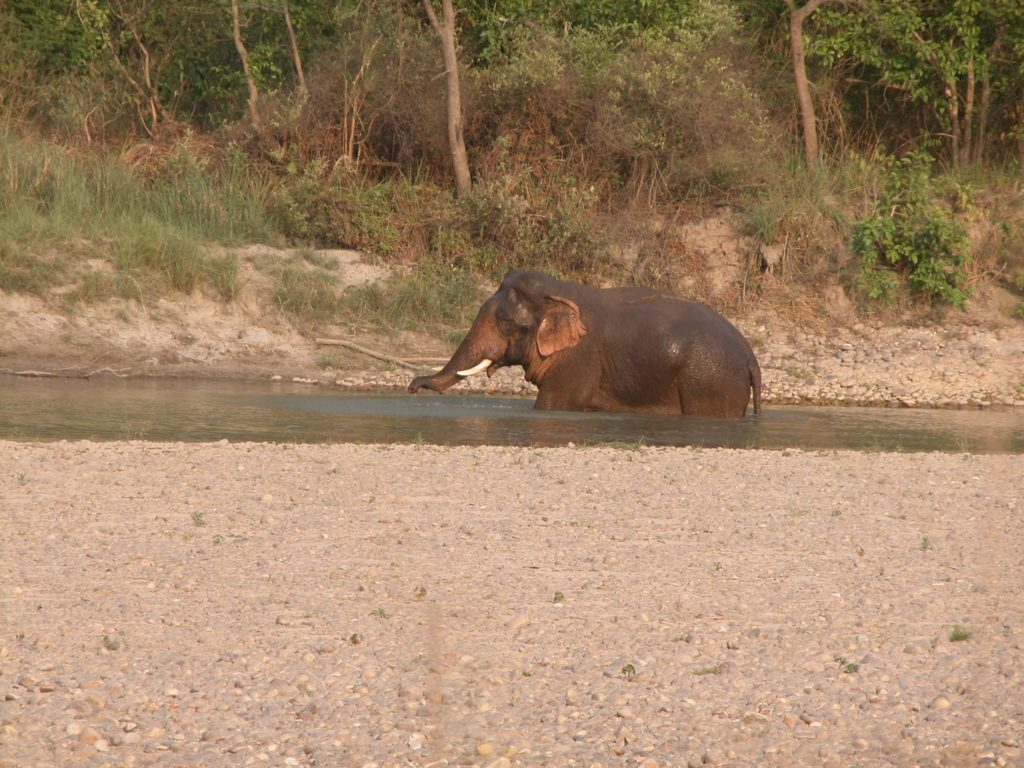 Bardiya national park (46)