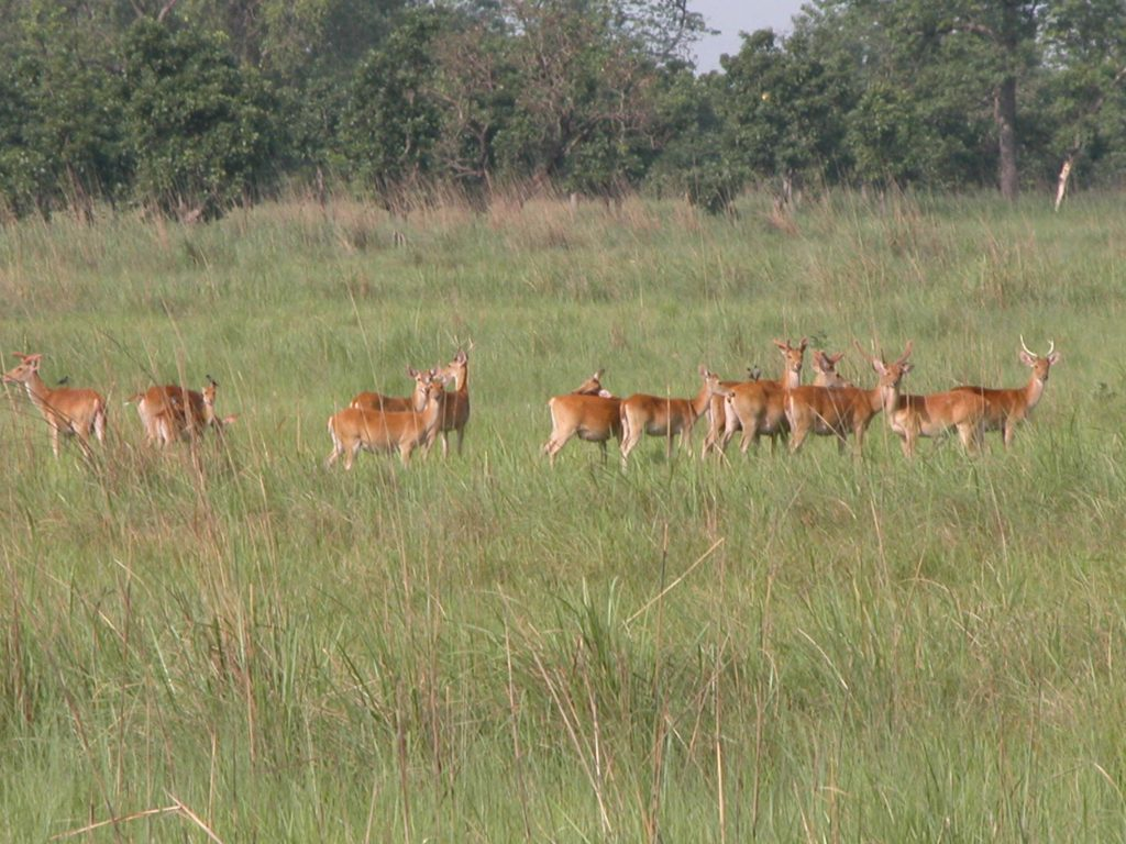 Bardiya national park (48)